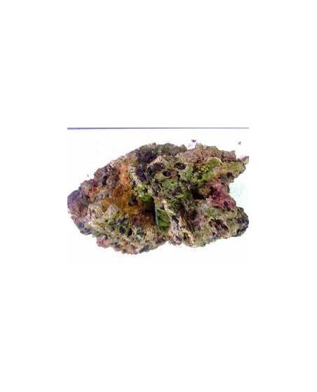 Roca Viva (Precio por Kg.)