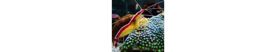 Invertebrados, Moluscos y Crustáceos